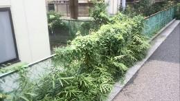 伸びた雑草